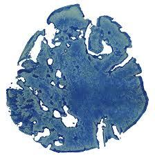 elephantfootprint